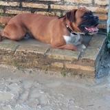Simón  (Boxer)