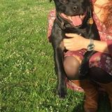 Riki (Staffordshire Bull Terrier)