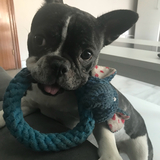 Nora (Bulldog Francés)
