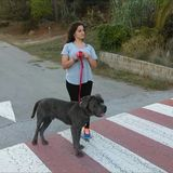 Timi (Perro Corso Italiano)