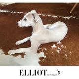 Elliot (Whippet)