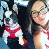 Lia (Bulldog Francés)