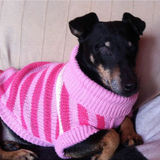 Moneypenny (Manchester Terrier)