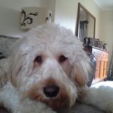 Toby (Mixed)