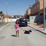 Jack (Scottish Terrier)