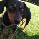 Píxel (Perro Negro Y Fuego Para La Caza Del Mapache)