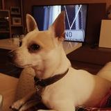 Terrón (Chihuahua)