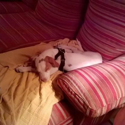 Thumb yanko dormido