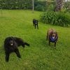 Elena: Tengo 3 perros, donde caben 3 caben más!