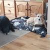Kriss ( Kristin): Hundesitter mit Hundeerfahrung.