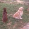 Aurelie: Dogsitter 65/32