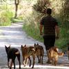 Iker: Alojamiento para tu perro