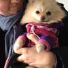 Thierry: Garde chiens de petite taille