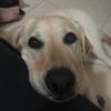 Sara: Cuidadora de perros y gatos en Sevilla