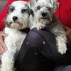 Claudia: Cuidadora de Mascotas en Castro Urdiales