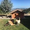 Marina: Amante de los perros con amplia finca con jardin!