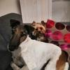 Alexa: Garde de chien