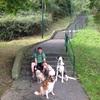 Gorka: Paseador, cuidador y adiestrador canino en Bilbao