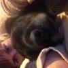Sylvie: Des vacances pour votre chien