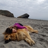 Debora : Vacaciones en el campo para tu compañero peludo