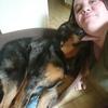 Elysa : Pet sitter du 91