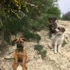 Belen: Sin mascotas no hay paraiso