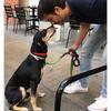 Gerardo: El mejor amigo para tu perro