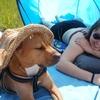 Aida: Aux. Veterinaria y Peluquera Canina