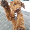 Iraida: Comparto mi tiempo con los más leales, dulces y fieles amigos: Los perros