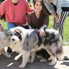 Constanza: Cuidadora y paseadora de mascotas