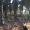 Mag: Eden de perros en el campo sin jaulas y con piscina.Como en su dulce hogar!