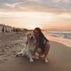 Andrea: Paseadora de perros en pozuelo y aravaca