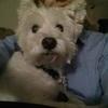 Trisha: Cuidadora de perros