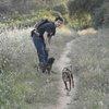 Jordi: Paseo Perros en Cerdanyola y alrededores.