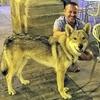 Antonio: Cuidador,paseador en Lleida