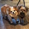 Debbie: Dog sitter & walker Huyton area