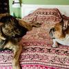 Carlota: Cuidadora perros Valladolid