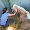 Maureen: Propose gardes et balades pour vos animaux