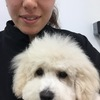 Rowena: Wimbledon dog care and groomer