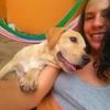 Daniela: Paseadora y Cuidadora de Perros en Cartagena, centro