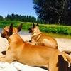 Andrea: Vacaciones para perros