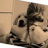 Amanda: Cuidadora de animales en Gandia