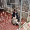 Amélie : L'amour des animaux
