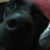 Alicia: Paseadora de perros en Santiago