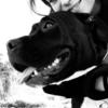 Alícia: Cuidadora de perros