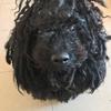 Valeria : Cuidadora de Perritos y otros animales ♥️