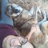 Sarah: Amoureuse des chiens