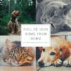 Cecilia: Full Of Love Home from Home