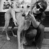Lola: Dog sitter con experiencia