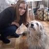 Niki: Cuidadora de perros/gatos/mascotas en Madrid centro; Arguelles area